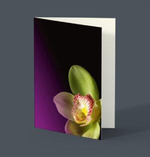 Flora Orchidee